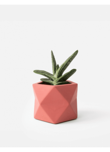 Planter Mare | medium pomegranate