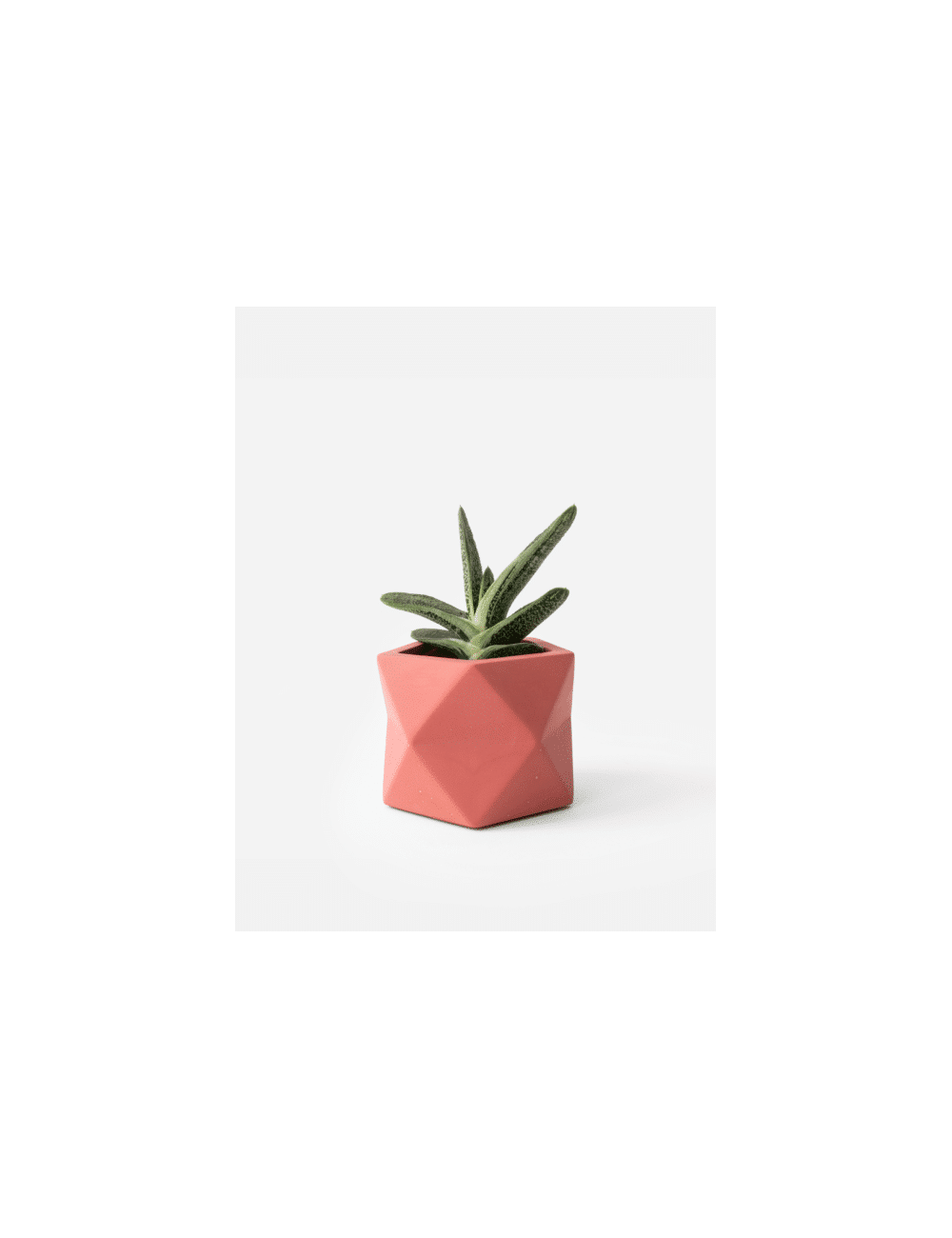 Planter Mare | medium pomegranate