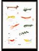 Poster Mado & Friends | 50x70 cm